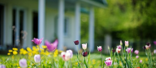 Spring Tips for Inside Your Home